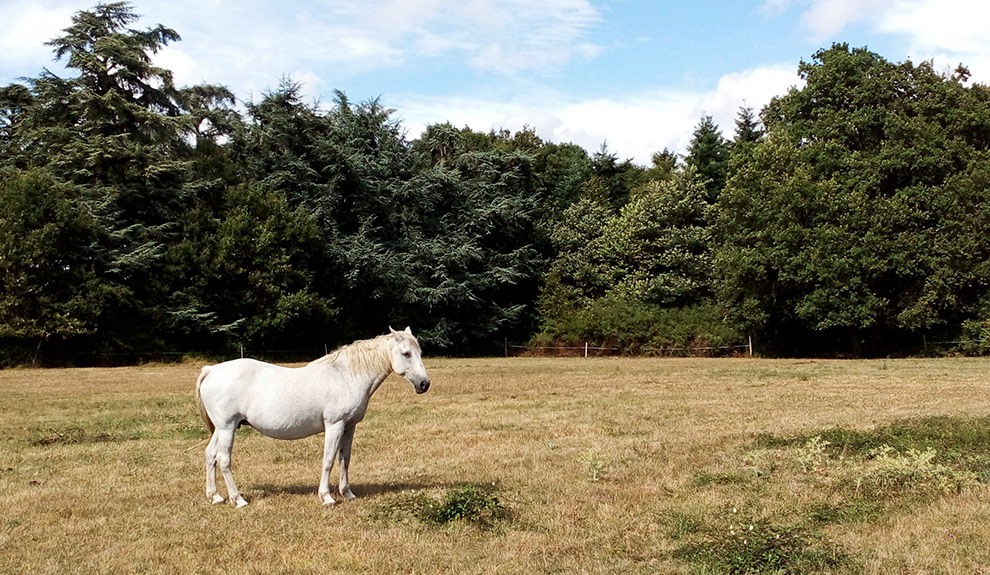 Promenade à cheval et tir à l'arc à 300m du château